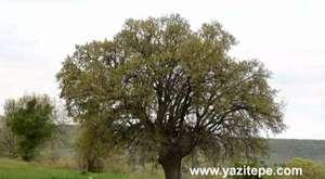 Uşak İli Banaz İlçesi Yazıtepe Köyü ve Dernek Tanıtımı